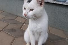 beli-muc